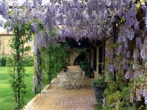 jardin baix emporda glicinia