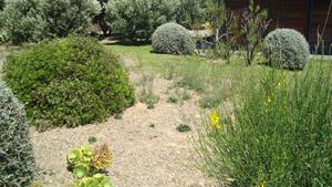 jardin cadaques