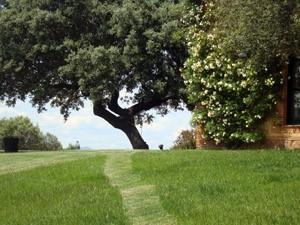 jardin extremadura encina