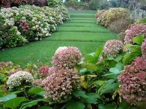 jardin l'estartit hortensias