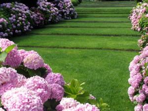 jardin estartit hortensias