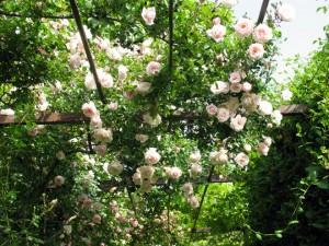 jardín rupià