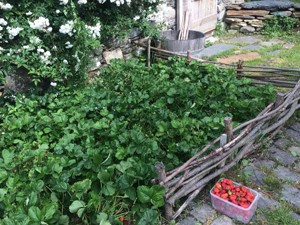 jardín vall d'aran